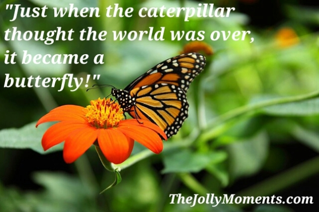 Just when the butterfly thought